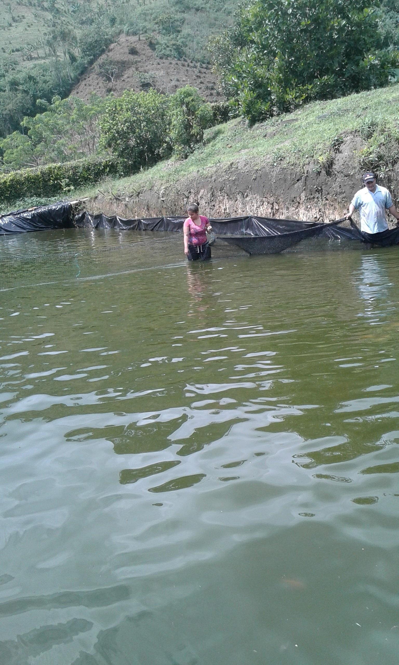 peces14